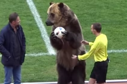 Grizzly bear hands ball to referee, Russian football league under fir