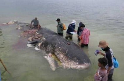 Indonesia - Dead whale found with 115 plastic cups in body